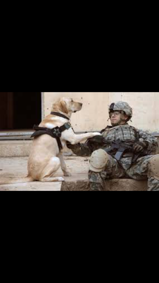 Reuniting Soldiers With Their Dogs