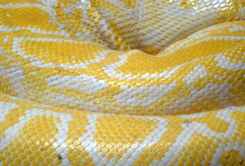 How owning a snake changed one girl's life forever