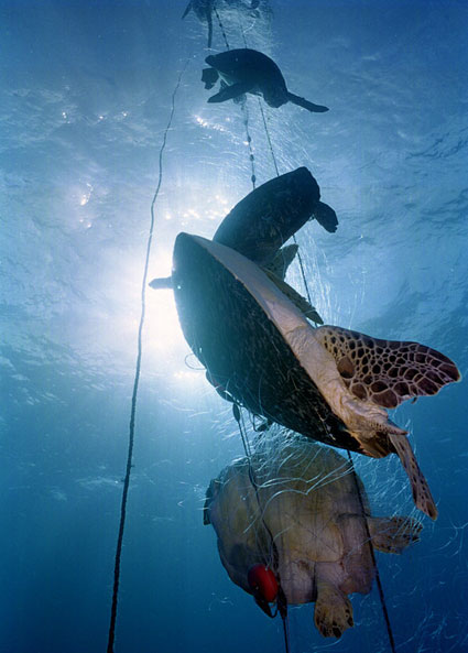 Bycatch is Causing Fish To Be Harmed